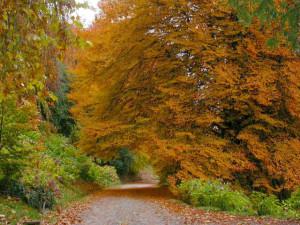 Foliage-piemonte-2